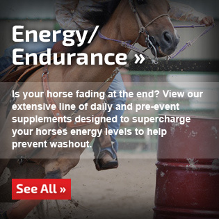 Energy/Endurance Supplements for Horses