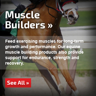 Equine Muscle Building Supplements