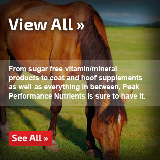 See All Equine Supplements